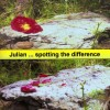 Product Image: Julian - Spotting The Difference
